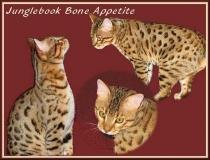 Junglebook Bone Appetite: F5 male, BST: Awagati Rollin Da Bones x Junglebook  Raisin Cane