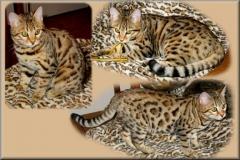 Junglebook Camoflouge: F4 queen, BST: Junglebook Cubby Coo x Junglebook  Birchbark